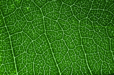 Aluminium Prints Macro photography Green leaf macro texture background.