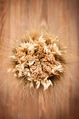 spikelets  rye, oats, wheat, mustard