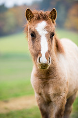Small horse foal