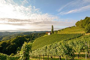Foto op Canvas Ballon Weinberge bei Gamlitz an der südsteirischen Weinstrasse, Steiermark Österreich Europa