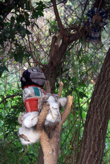 Old Spooky Toy hanging in a tree in Mexico City [Isla de las Munecas /Island of the Dolls]