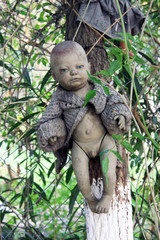Old Spooky Doll hanging in a tree in Mexico City [Isla de las Munecas /Island of the Dolls]