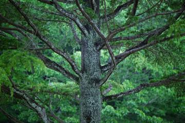 新緑の木とエコロジー