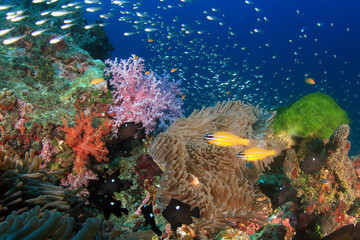 Tropical fish on coral reef sea ocean underwater