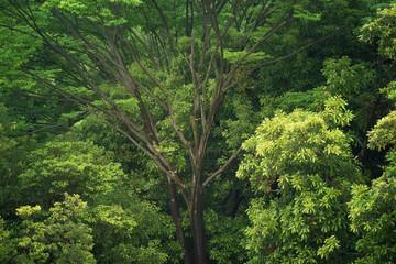 新緑の木, エコイメージ