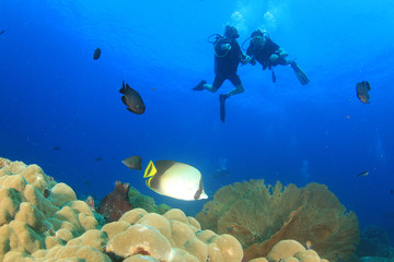 Scuba divers diving on coral reef with fish sea ocean underwater