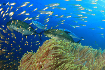 Coral reef, tropical fish, sea ocean underwater