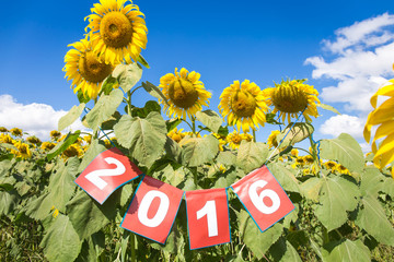 Happy new year 2016 on sunflower field, welcome 2016
