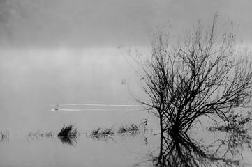 호수의 아침
