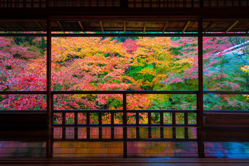 Printed roller blinds Kyoto 京都 瑠璃光院の紅葉