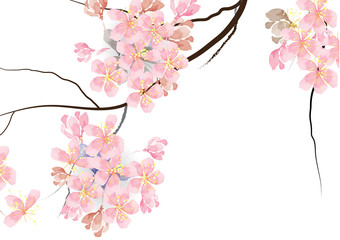 cherry blossom flowers with branch on white background, for card or object vector illustration