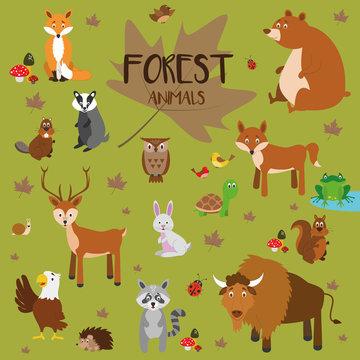 Conjunto de animales del bosque. Zorro, oso, ardilla, ciervo, conejo, tortuga, lobo, castor, buho, pajaros, rana, erizo, tejón, águila, caracol, mapache y bisonte. Ilustraciones de vector.