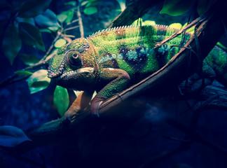Chameleon Look.