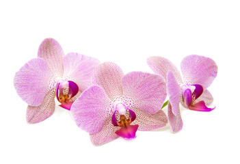 Orchid on a white