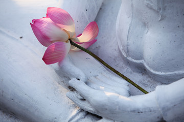 lotus flower on buddha image