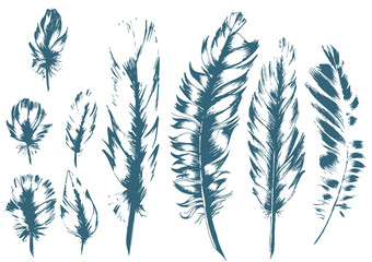 Vintage Feather blue vector set. Hand-drawn illustration.
