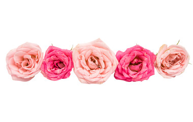 small pink roses