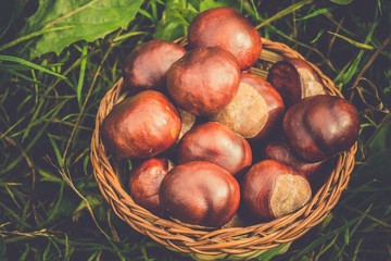 Fresh Chestnuts on Grass Retro