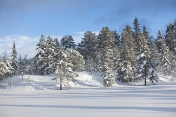Winter landscape in untouched nature