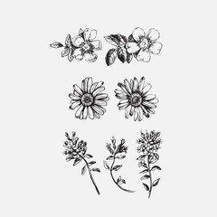 Set with drawing flowers