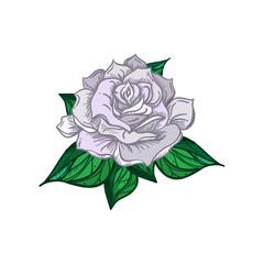 Hand Drawn Wedding Rose