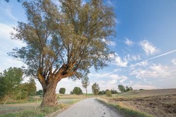 Country rural sandy road