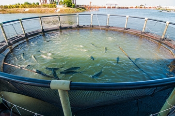 Fish farming at thailand.