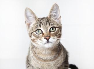 Cat portrait, cat close up portrait