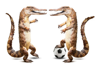 Crocodile soccer player