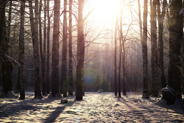 Winter tree forest