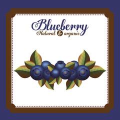 delicious blueberry design
