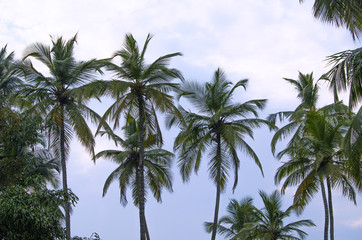 palm trees against clouds