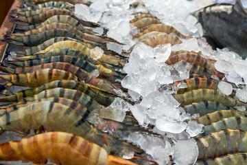 prawn, shrimp fresh