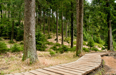 Wooden pathway in forest. National park Harz in Germany.