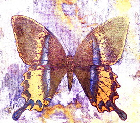 color butterfly, illustration and mixed medium, abstract  background, vintage rust effect.
