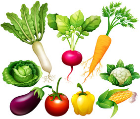 All kind of vegetables