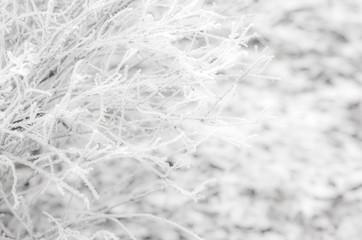 White wintry hoarfrost background