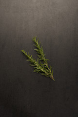 Two rosemary sprigs on stone background with copy space.