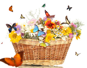 Beautiful wild flowers in basket and flying butterflies on white background