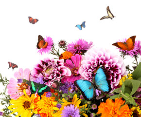 Beautiful wild flowers and flying butterflies on white background