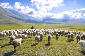 pastore con gregge di pecore sui monti Sibillini, Italia