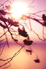 Abstract Plant Silhouette at sunset