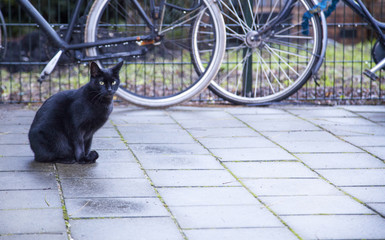 Black cat on the rainy street