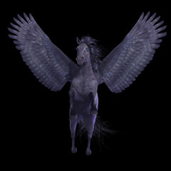Black Pegasus on Black - Pegasus is a divine mythical creature that has the form of a winged stallion horse.