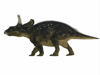 Nedoceratops Side Profile - Nedoceratops is a herbivorous ceratopsian dinosaur that lived in the Cretaceous Period of Wyoming, North America.