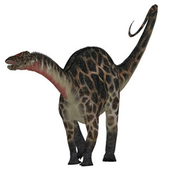 Dicraeosaurus on White - Dicraeosaurus was a sauropod herbivorous dinosaur that lived in the Jurassic Era of Tanzania, Africa.