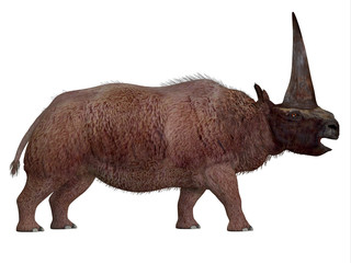 Elasmotherium Side Profile -Elasmotherium is an extinct mammal that lived in the Pleistocene Period of Russia, Ukraine, and Moldova.