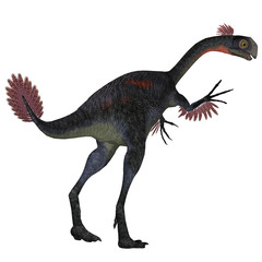 Gigantoraptor Dinosaur Tail - Gigantoraptor was a theropod dinosaur that lived in Inner Mongolia, China in the Cretaceous Period.
