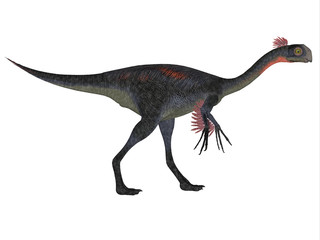 Gigantoraptor on White - Gigantoraptor was a theropod dinosaur that lived in Inner Mongolia, China in the Cretaceous Period.