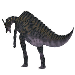 Saurolophus Dinosaur Tail - Saurolophus was a Hadrosaur herbivorous dinosaur that lived in Mongolia, Asia in the Cretaceous Period.